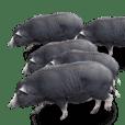 Negative pigs