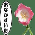 動く花-2、よく使う言葉