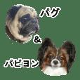 Dog Sticker Collection