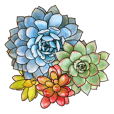 Greeting with Succulent Plants(Eng)