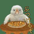 動く実写版『鳥』
