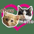 Cat Mono & Chou