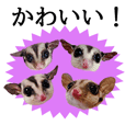 Sugarglider Cute Sticker