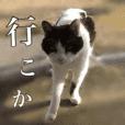 ねこneko日記(関西弁)改訂版