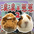 Guinea pig : eat & sleep - photo vol. 2
