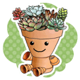 Flowerpot boy of the succulent plants