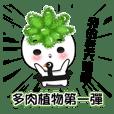 succulent plant NO.1