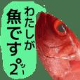 私が魚です。2