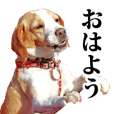 Beagle dog Yuki-chan