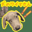 Dog weimaranenes