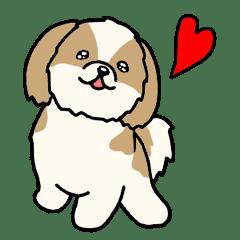 犬種別シーズー(英語Ver)