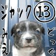 MIEDOG Jack Russell terrier sticker 13