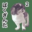 Lovely dog GINTA's sticker 2