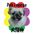 Pekingese's Osaka dialect sticker