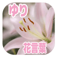Language of flowers - Lily -