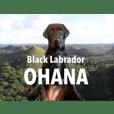 Black Labrador OHANA4