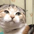 三毛猫ももちゃん6