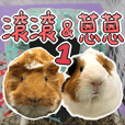 Guinea pig : eat & sleep - photo vol. 1