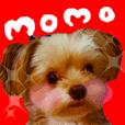 Cute momochan