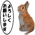 active rabbit cocoa-2