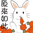兔子們的日常