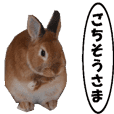 active rabbit cocoa-3