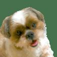 シーズー犬の可愛いスタンプ☆