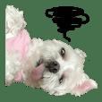 盲犬肥莉2