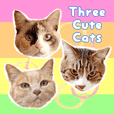 Three Cute Cats