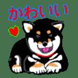 kuro-shiba's feeling part-6