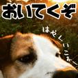 ダンディ風犬レオのスタンプ 日常編