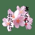 Cherry Blossom letter