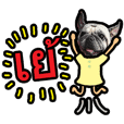 SHABU - the Pug