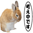 active rabbit cocoa-4
