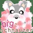soft and healed schnauzer big2