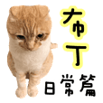 Ding-Ding cat