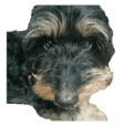 Various dogs of the Kansai dialect