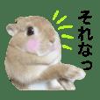 うさぎのうさこ2歳〜実写スタンプ3〜