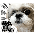 Shih tzu dog tempo photo sticker2