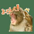嵐山のゆかいなお猿さん
