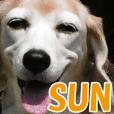 【実写】SUN