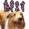Sheltie Ciel's moving sticker 2