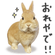 Inari the Rabbit Sticker