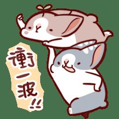 肥兔寶 - 絕妙互動篇