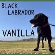 黒ラブバニラ