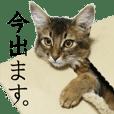 【実写版】ソマリのがっちゃん