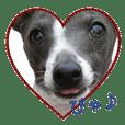 Lucky dog Cobalto
