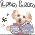 "toy poodle ""LUNLUN""-movie- English 4"