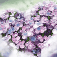 Hydrangea's love