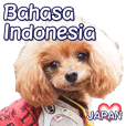 ファンチョコリンのインドネシア語